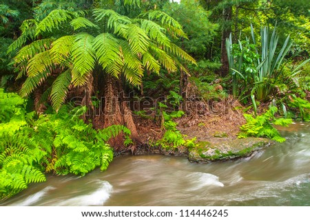 River beween trees in rain forest in New Zealand - stock photo