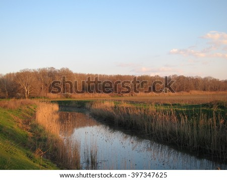 River covered with marsh bulrush at sunset in early spring