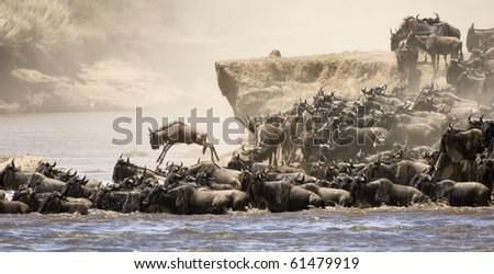 River crossing great migration Masai Mara - stock photo