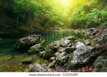 River deep in mountain forest. Nature composition. - stock photo