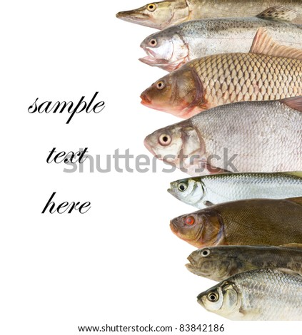 River fish background - stock photo