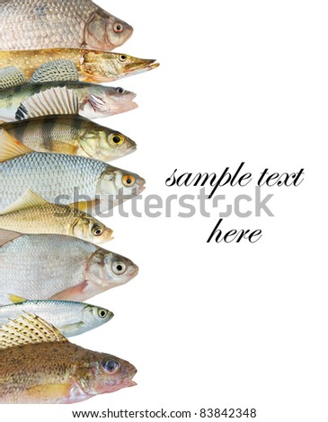 Small Freshwater Fish Stock Photos Images Pictures