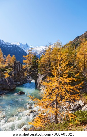 River in alp landscape at autumn
