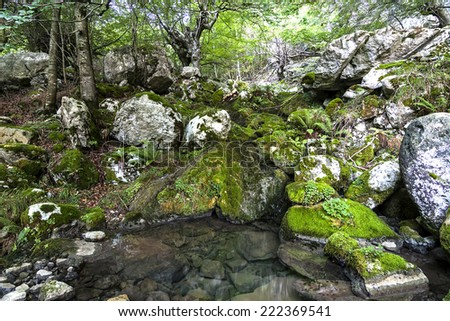 River in beech forest. Collados del Ason natural park, Cantabria (Spain). - stock photo