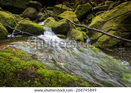 river in forest - Czech saxon switzerland  - stock photo