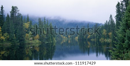 River in forest landscape - stock photo