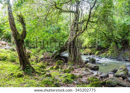 River in the jungle of Panama, El Valle de Anton - stock photo
