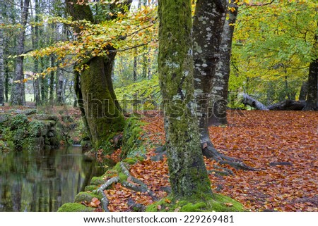 river in the portuguese national park of Geres, in the north of the country - stock photo