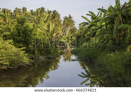 River in the tropical forest.