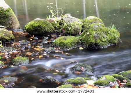 River in the wood - stock photo