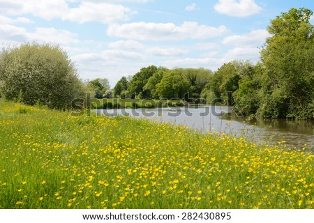 River Medway flows through farmland in Kent, England. The riverbank is lush with grass and buttercups. - stock photo