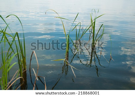 River reeds in the background of the river with the sky reflected in water - stock photo