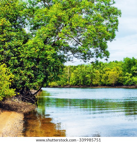 river shore with mangroove trees in Thailand - stock photo
