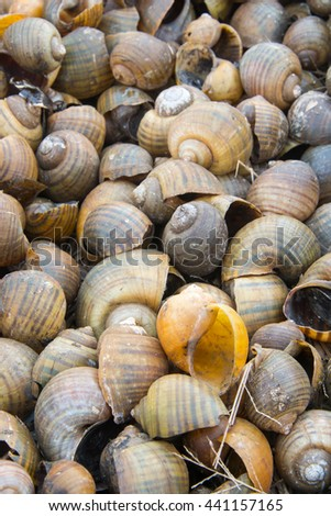 River snail shell close up background - stock photo
