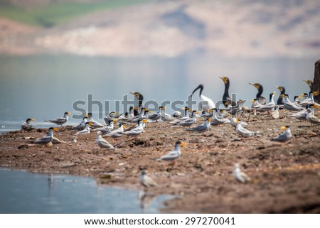 River terns breeding site