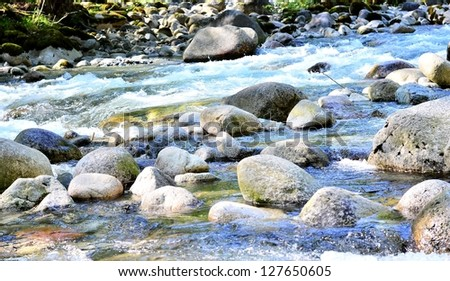 River view in the forest - stock photo