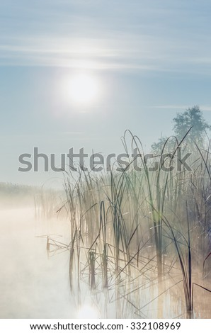 River with reed reflected in the Delta of the Volga River at foggy sunrise, Russia - stock photo