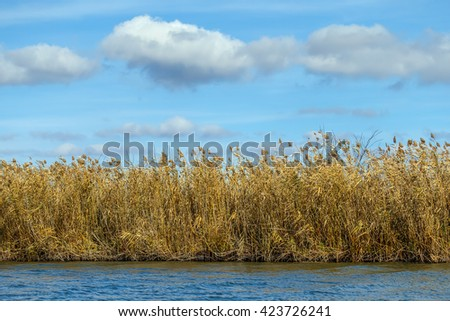 River with reed reflected in the Delta of the Volga River. Blue sky with Cumulus clouds in the background - Russia - stock photo