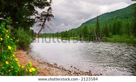 River, yellow flowers and mountains. Altay. Russia. - stock photo