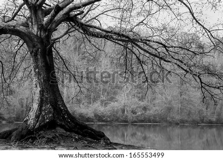 riverside tree black and white - stock photo