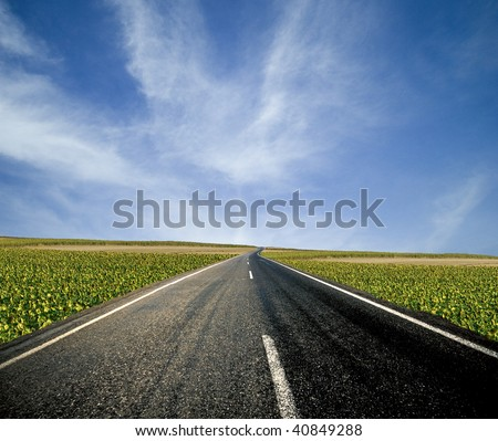 Road ahead and the sunflower fields