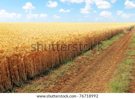 Road along edge of a wheaten field on the blue sky background - stock photo