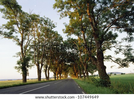 Road amidst trees - stock photo