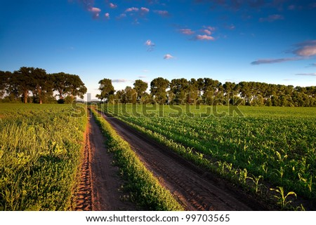 Road and green corn field - stock photo