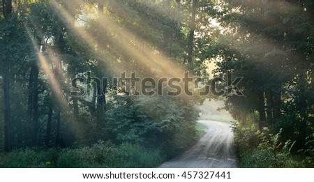 Road and sunbeams in strong fog in the forest - stock photo