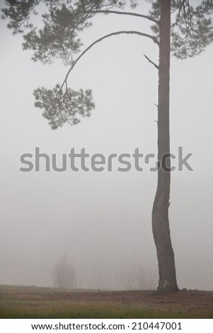 road and tree in fog. The trees with fog in the forest  - stock photo