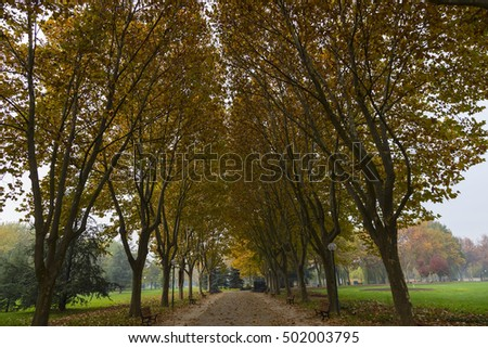 Road and trees in autumn.