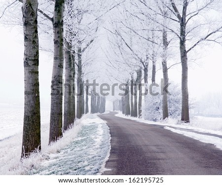 road and trees on the countryside are covered with snow on a cold winterday  - stock photo
