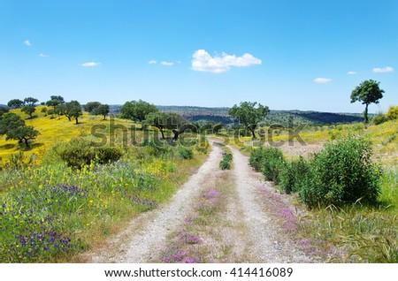 Road at  blossom field,alentejo, Portugal. - stock photo
