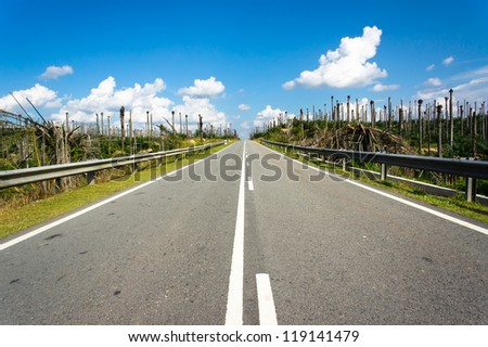 Road at palm oil plantations - Business on the move concept - stock photo