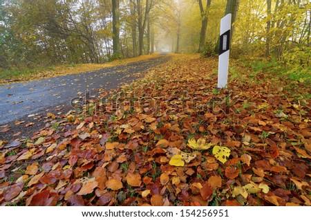 road, autumn, fog, foliage - stock photo