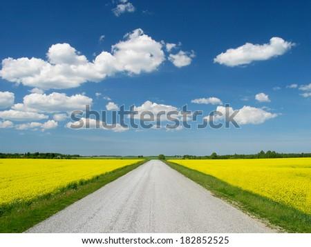 Road between rape canola field - stock photo