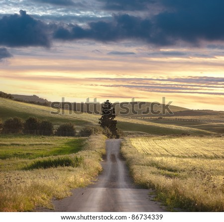 road crosses rural landscape with the silhouette of tree on background the colors of the sunset - stock photo