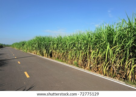 Road for the Sugar Cane Field, thailand - stock photo
