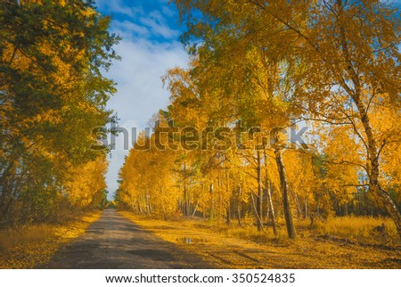 Road in a autumn birch grove. Beautiful colorful trees