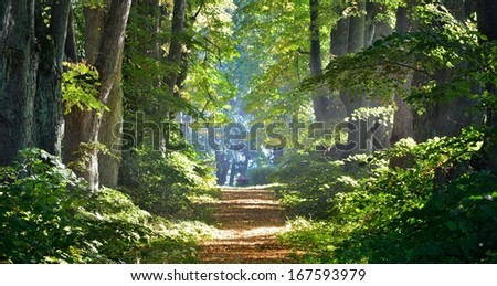 Road in a beautiful forest in the morning - stock photo