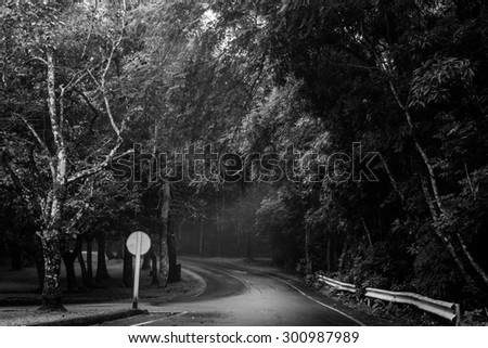 road in a dark forest  - stock photo