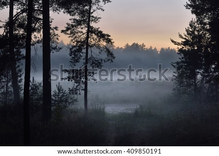 Road in a foggy pine forest at sunrise - stock photo