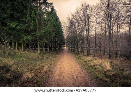 Road in a forest at dawn in the fall - stock photo