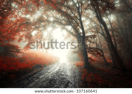 road in a forest in autumn - stock photo