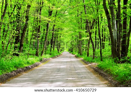 Road in a green forest. Spring forest. The sun's rays make their way through the trees and fall onto the road - stock photo