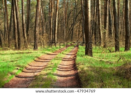 road in a spring forest