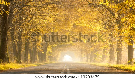 road in autumn - stock photo