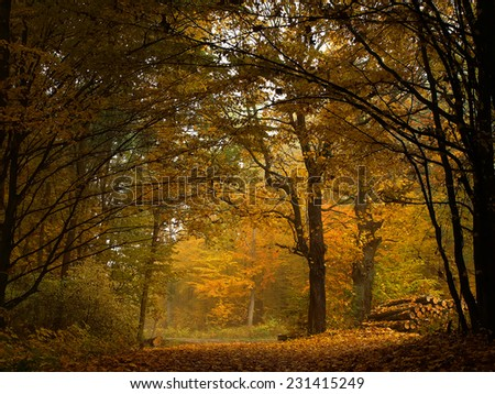 Road in autumn forest - stock photo