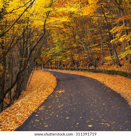 Road in autumn forest. Beautiful natural autumn landscape