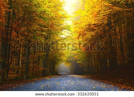 road in autumn forest with colorful foliage tree - stock photo